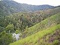 Aspectos de la vegetación de la Parroquia.jpg