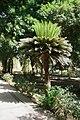 Aswan Kitchener island 6.jpg
