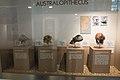 Australopithecus, sculls, Anthropos Pavilon, Brno, 187932.jpg