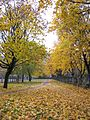 Autumn in Kyiv (1762627387).jpg