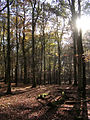Autumn in the Islands Thorns Inclosure, New Forest - geograph.org.uk - 81163.jpg