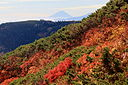 Autumn leaf color with Mount Fuji