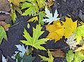 Autumn leaves - Großer Tiergarten, Berlin, Germany - DSC09558.JPG