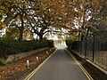 Autumnal Ivy Lane near Market Hill - geograph.org.uk - 603624.jpg