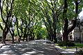 Avenida Melián.jpg