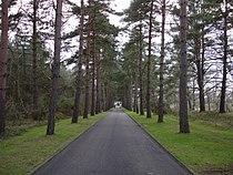 Avenue leading from Brookwood cemetery.jpg