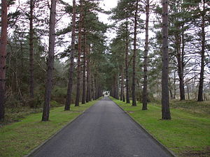 Brookwood, Surrey - Image: Avenue leading from Brookwood cemetery