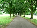 Avenue of trees, Clarence Park, Wakefield - geograph.org.uk - 192330.jpg