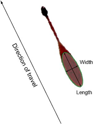Bloodstain pattern analysis - Image: BPA ellipse example