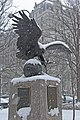 Bald Eagle Washington DC.jpg