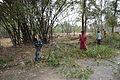Bamboo Harvesting - Mahimapur - Murshidabad 2017-03-28 6128.JPG