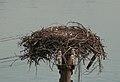 Banff Osprey Nest (222388111).jpg