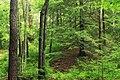 Bark Cabin Natural Area (10) (14422789282).jpg