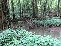 Battle Creek Cypress Swamp 40.jpg