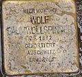 Baumwollspinner, Wolf.jpg