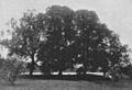 Bellmanslinderna Follan 1925.jpg