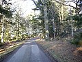 Bend in driveway to Kincardine House - geograph.org.uk - 1116804.jpg