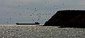 Berezan island.jpg