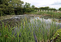 Betts Lane and Common Road junction pond at Nazeing, Essex, England 02.JPG