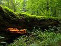 Białowieża National Park, Poland (4664497796).jpg