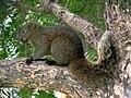 Big Tail (17020788387).jpg