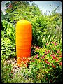 Big carrot - Flickr - pinemikey.jpg