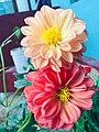 Big flowers.jpg