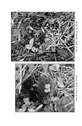 Bird homes - The nests, eggs and breeding habits of the land birds breeding in the eastern United States with hints on the rearing and photographing of young birds (1903) (14564648769).jpg