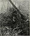 Bird notes (1902) (14726889226).jpg