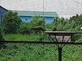 Bird park at Bangabandhu Sheikh Mujib Safari Park.jpg