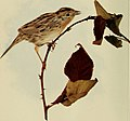 Birds and nature (1902) (14749840104).jpg