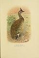 Birds of La Plata (Plate) (7789507696).jpg