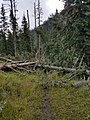 Black Hills National Forest - Social 2.jpg