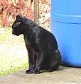 Blackie (24164923079).jpg