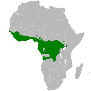Bristlebill - Image: Bleda distribution map