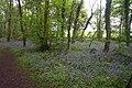 Bluebell Wood - geograph.org.uk - 169439.jpg