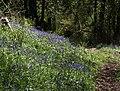 Bluebells in Woodcock Wood (2) - geograph.org.uk - 1292367.jpg