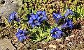 Blumen in Oelsnitz Erzgebirge, Sachsen 2H1A1360WI.jpg