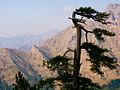 Bocca di Caprunale (col de Capronale), Sentier de la transhumance, Corsica (France).jpg