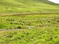Boggy bit by the Afon Arban - geograph.org.uk - 851180.jpg