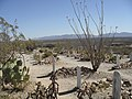Boothill Graveyard view 3.jpg