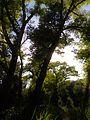 Bosque de ribera.jpg