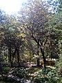 Bosques del Encinal - panoramio.jpg