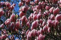Botanic garden - Cluj-Napoca (4543567181).jpg