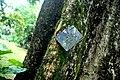 Botanic garden limbe152.jpg