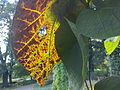 Botanical Garden Poznan xxxx (5).jpg