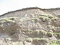 Boulder Clay Cliff below Bachwen - geograph.org.uk - 243876.jpg