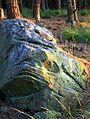 Boulder in Forestry. - geograph.org.uk - 579229.jpg