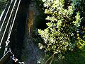 Brevard Zoo, Viera FL - Flickr - Rusty Clark (44).jpg