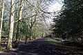 Bridleway at Gernon Bushes Nature Reserve, Coopersale Essex England.jpg
